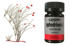 Forms of Ephedrine: Ephedrine HCL, Sulfate and Alkaloids